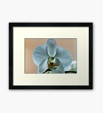 Beautiful White Orchid Framed Print