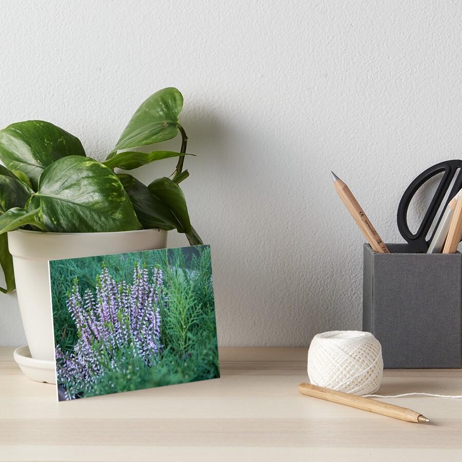 Evergreen tree green and purple wild flowers, Autumn colors, original photography Art Board Print