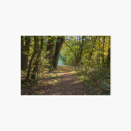 Road through forest, pathway, partial shade, leaves on the ground, Autumn, original photography Art Board Print