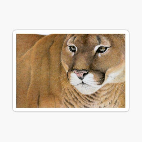 Mountain Lion Sticker