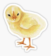 Watercolor Easter Chick, Fluffy Yellow Baby Chicken Sticker