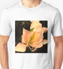 Bauhinia  with sunset glow T-Shirt