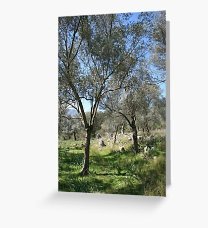 A Turkish Olive Grove Greeting Card