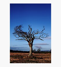 A Tree With Majestic Charm Photographic Print