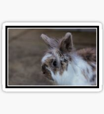 Fluffy and furry friend, The Rabbit Sticker