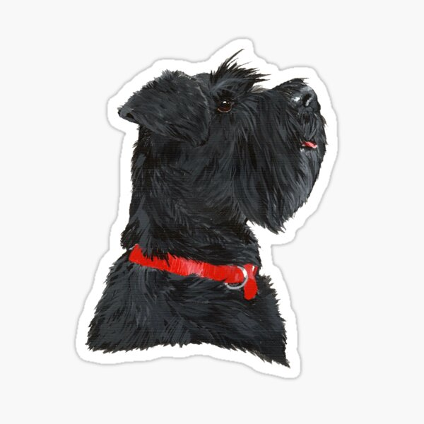 Miniature Black Schnauzer Head Shot Sticker