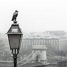 Sentinel by Dragan Radujko