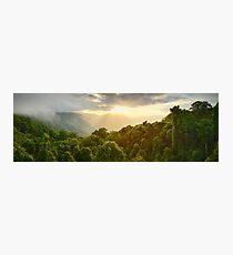 Tree Top Dawn, Dorrigo National Park, New South Wales, Australia Photographic Print