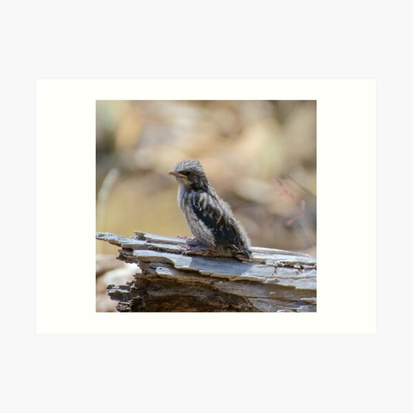SWALLOW ~ Dusky Wood Swallow PVL3TEWU by David Irwin Art Print