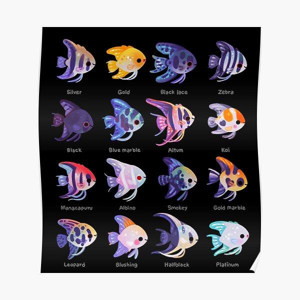Angelfish! (freshwater) - name Poster
