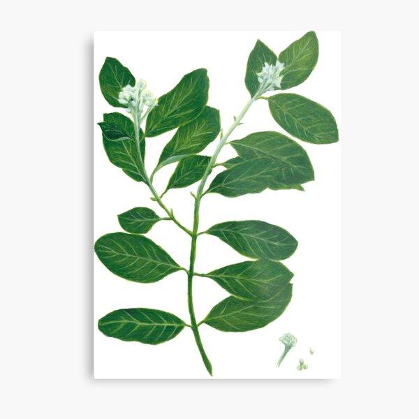 Mt. St. Helena Olive Metal Print