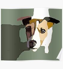 Jack Russel in the sun Poster