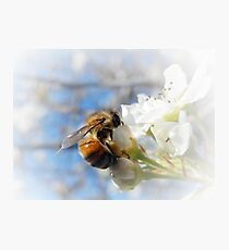 GATHERING POLLEN AND NECTAR Photographic Print