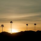 Palm Tree Sunrise by barnsis