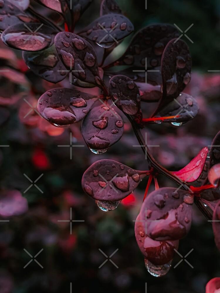 Wet Red Leaves by didssph-prints