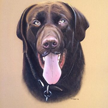 Mo the beautiful chocolate Labrador by micheleashby