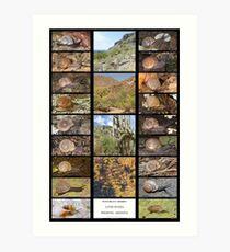 Sonoran Desert Land Snails of Phoenix, Arizona Art Print