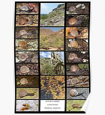 Sonoran Desert Land Snails of Phoenix, Arizona Poster