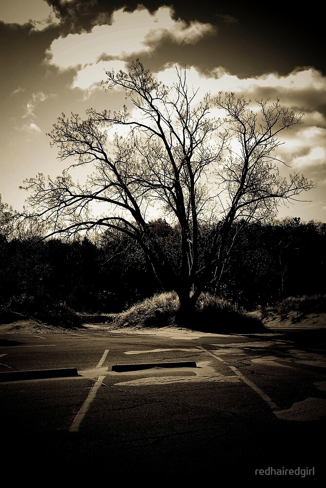 Tree of lake michigan by redhairedgirl