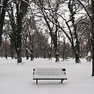 Snow again!! by Maria1606