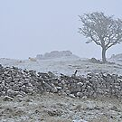 Snow in the Dales by mikebov