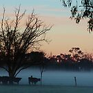 Winter morning at the farm. by Jeanette Varcoe.