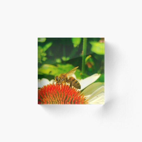 Bee Acrylic Block