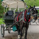 Horse  & Cart  by Martina Fagan