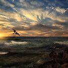 Morning Magic by TOM YORK