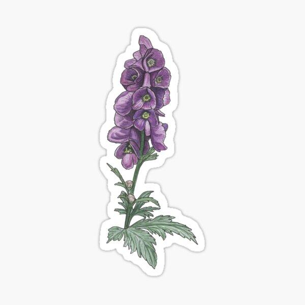 Chinese wolfsbane botanical drawing Sticker