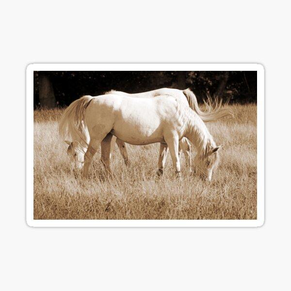 Polish Arabs Horses Sticker
