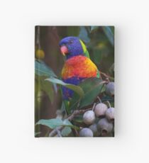 Swainson's Rainbow Lorikeet  Hardcover Journal