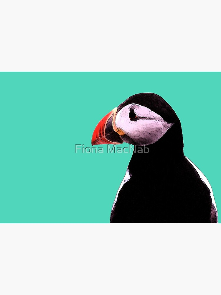 Puffin by orcadia