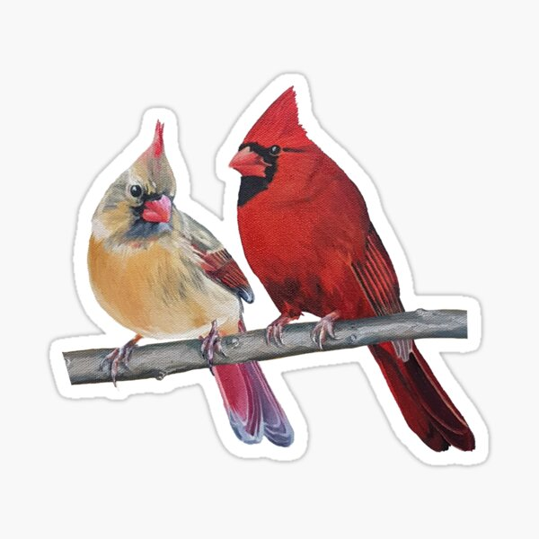Northern Cardinals Pair painting (no background) Sticker