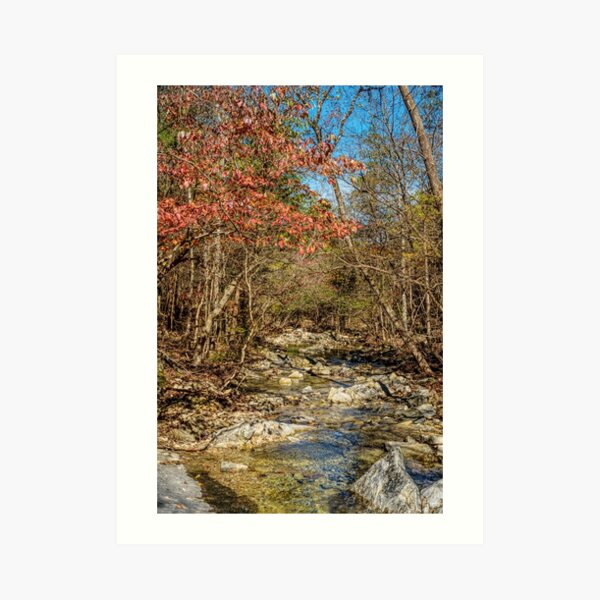 Fall Along The Creek In Henning Conservation Art Print