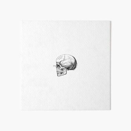 Vintage anatomical medical skull illustration Art Board Print