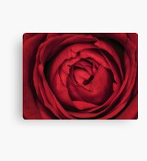 Beautiful Red Rose Blossom Canvas Print