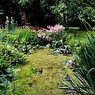 Garden Lily Pond by AnnDixon