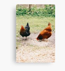 Little Red Hen and Company Canvas Print
