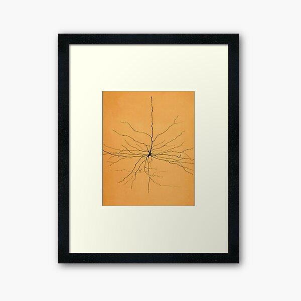Pyramidal Cell in Cerebral Cortex, Cajal Framed Art Print