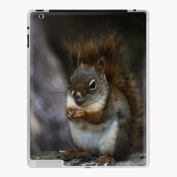 Will work for seeds iPad Skin