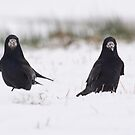 Rooks in the snow by M S Photography/Art