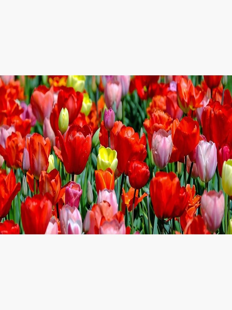 tulips pillow flowers by bykondel