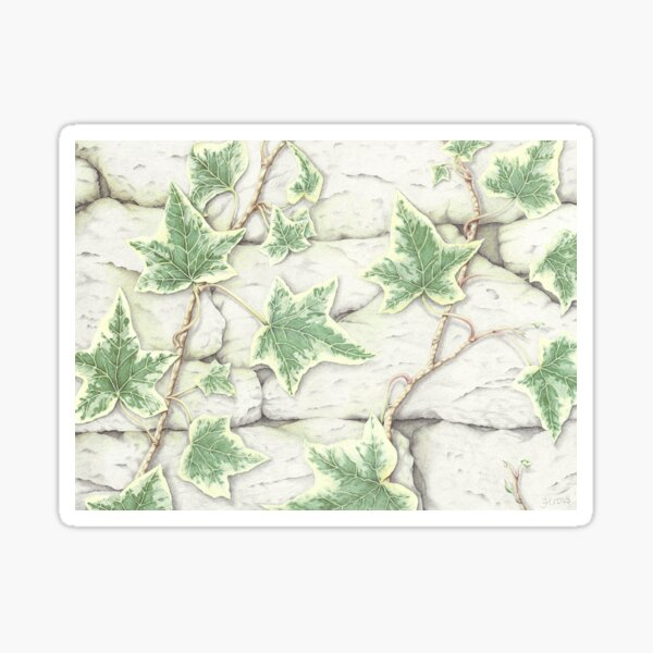Ivy on a Dry Stone Wall Sticker