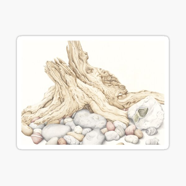 Driftwood and Pebbles Still Life Sticker