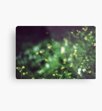 The softness of spring Metal Print