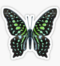 Deco Butterfly Tailed Jay Sticker