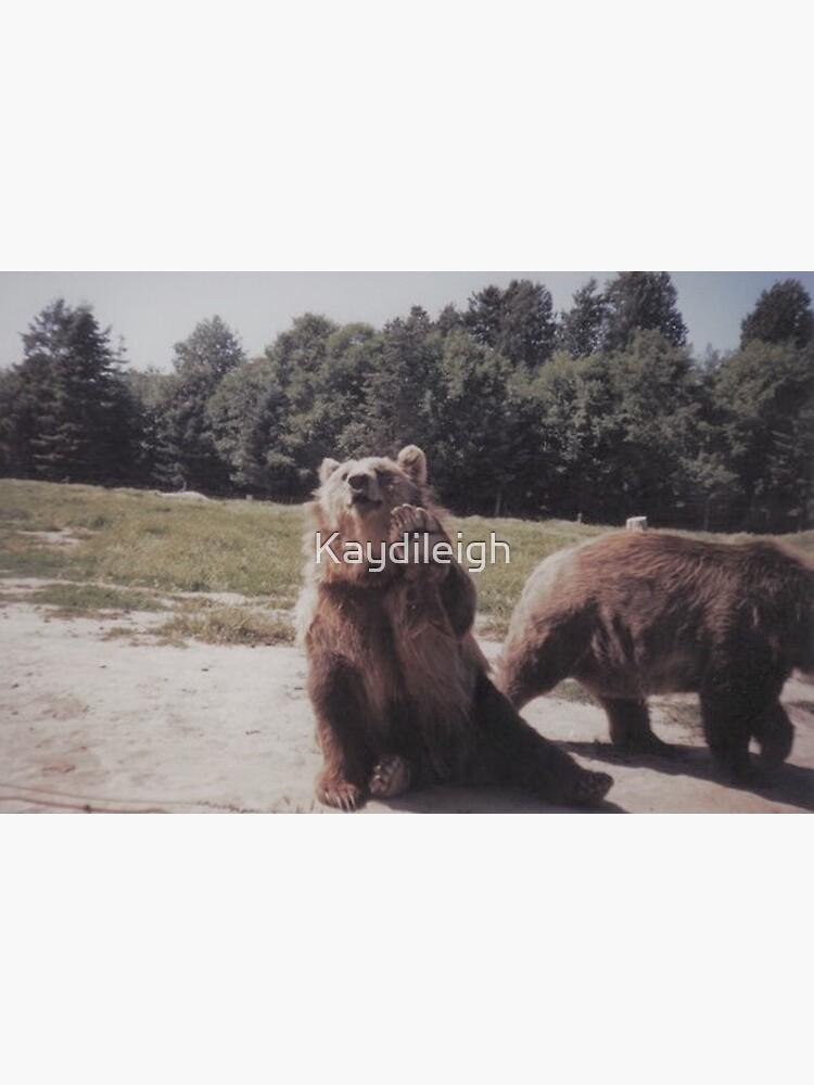 Big Brown Bear by Kaydileigh