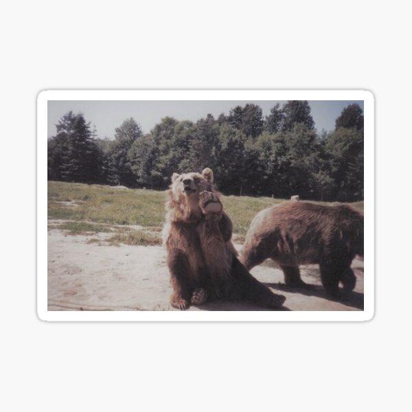 Big Brown Bear Sticker