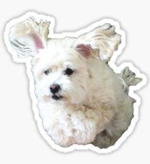 Moby Sticker